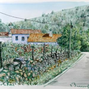 収穫後の葡萄畑