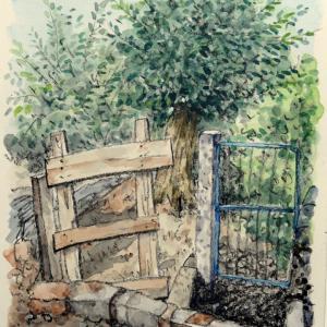 オルタ(裏庭)の扉とオリーブの樹