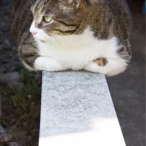 【城崎の花火《62》】喜満満猫、ピンチ!