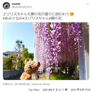 お客さまからのお写真♡あみぐるみエゾリスさんとお花♡