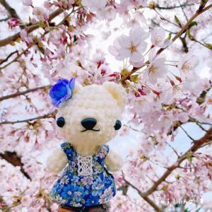 五稜郭公園の桜を見に行って来ました♡