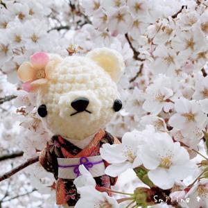 桜と着物くまちゃん♡