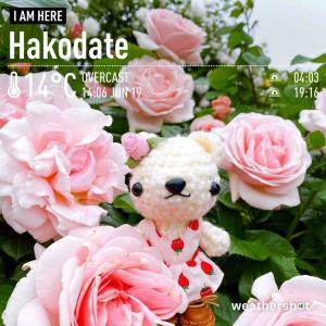 函館市旧イギリス領事館のバラとあみぐるみくまちゃん♡