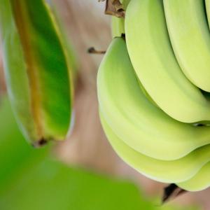 ネパールのバナナ