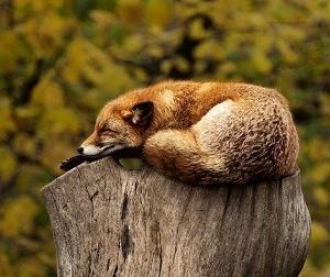睡眠を充実させる効果的な工夫