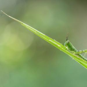 日本人も昔は虫を食べていた!気になる「昆虫食」ってどんな味?