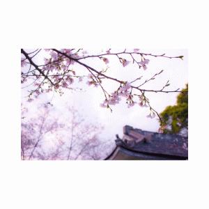 曜日めくり(木)