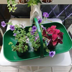 ★ベランダのお花、植え替えました♪