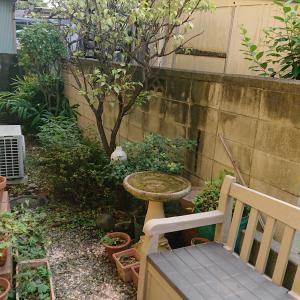 秋が来る前の裏庭の手入れ。