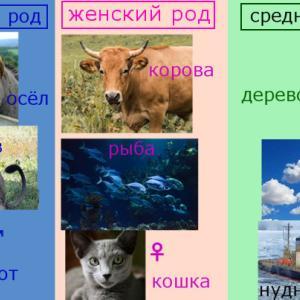 ロシア語名詞の男性・女性・中性の区別と複数形の作り方
