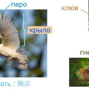 鳥(птица)に関するロシア語単語