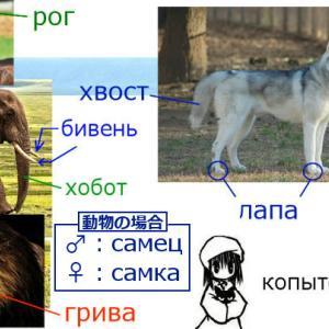 動物に関連するロシア語名詞・動詞