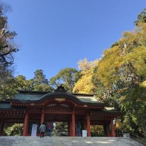 香取神宮菊まつりと和菓子の「むさしや」さん 秋の思い出パート3#189
