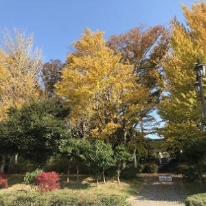 イチョウ巡り☆青葉の森&昭和の森 秋の思い出パート4 #190
