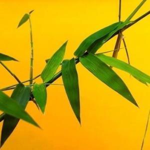 竹は1日に1メートル成長する?実はエコな【竹製品】