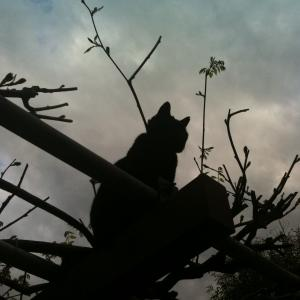 【野良猫】【四猫 多頭飼い】