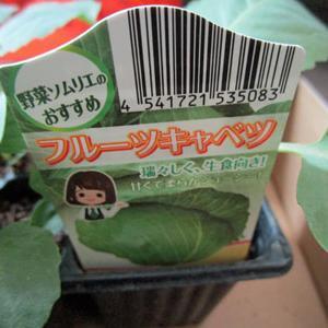 初めて聞いた品種、「フルーツキャベツ」