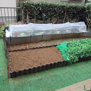 晩生の白菜は、遅く植えられる訳じゃない???