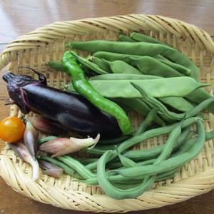 6月12日の収穫・・・豊作を引き寄せる?