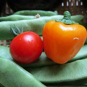 昨日の収穫・・・ミニトマトはパックリ
