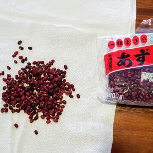 小豆の使い方、湿布と発酵小豆。