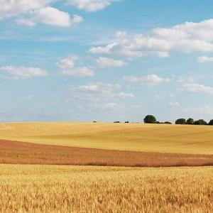 食糧危機に備えて日本は穀物輸出禁止法を準備せよ