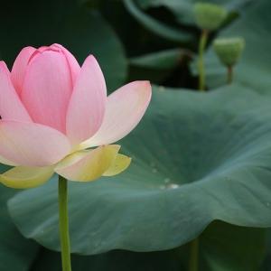 性欲を抑える方法(仏教的コントロール法)