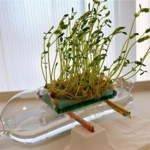 【水耕栽培】種まき〜1週間を振り返る、ついでペットボトル工作