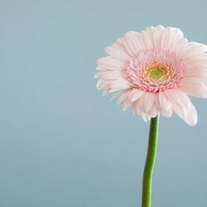 花は咲くと信じて歩いてみます。