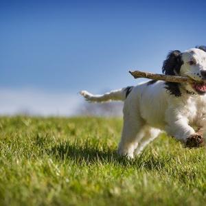 犬も歩けば勝者に当たる、「専業」の世界。