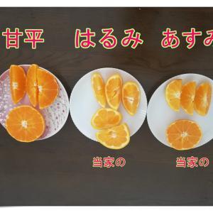 柑橘の頂きの味を知る。 「甘平 匠と極」を買ってみた。 どれ程の差があるのか?