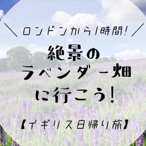 ロンドンから1時間!絶景のラベンダー畑に行こう!【イギリス日帰り旅】
