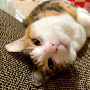 もふ猫「先輩猫さんの食道チューブ」の巻
