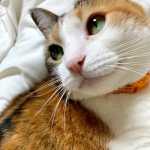 もふ猫「大腸内視鏡、検査後はきちんと休もう!」の巻