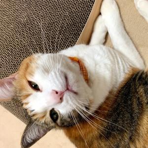 もふ猫「じぃじのガン 今は静かにゃ」の巻