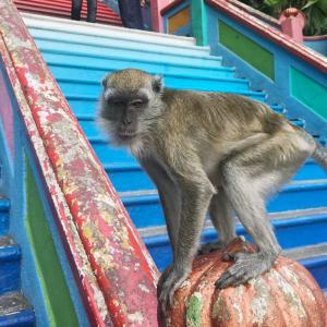 お猿さんがいっぱい!バトゥ洞窟へのアクセスと楽しみ方。