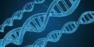 50%の確立で病気の要因は遺伝している。遺伝子検査も悪くないだろう。。