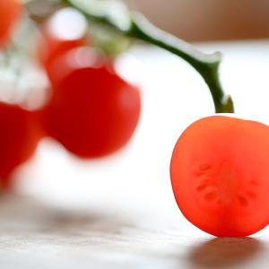 ミニトマトの栽培11