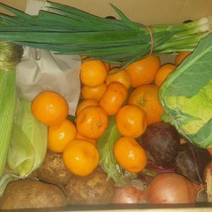またまた変わった野菜がやって来た!