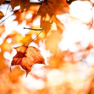 連休が終わった…。すっかり秋。