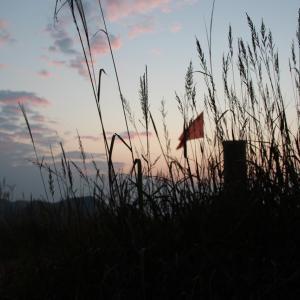 【小泉今日子・悲報】「小泉今日子」が赤旗1面に登場! ネット「真っ赤な女の子、あの歌まじやったんや」