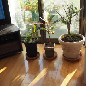 部屋に入れた植物のおかげで、部屋が綺麗に  体に嬉しい頂き物♡