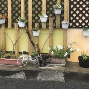 花や野菜達(^^♪