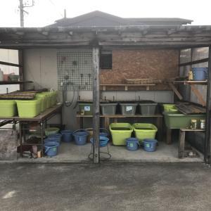 夢yakataの屋根&メダカ部屋屋根めでたく完成(^_-)-☆