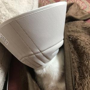 レイちゃん(猫・♂)の近況♪