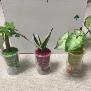 【観葉植物】部屋に置くデスクにぴったりの観葉植物はこれだ!!(すぐるチョイス)