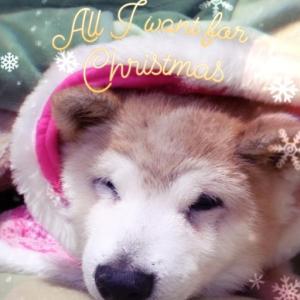 メリークリスマス♥