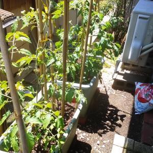 プランターでの野菜栽培……