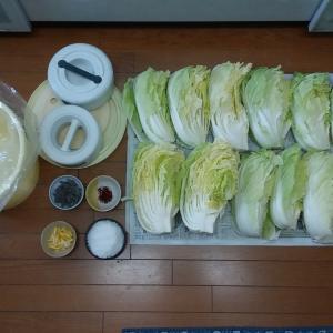 白菜漬け……2回目の挑戦⁉