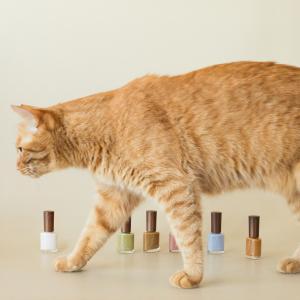松田未来プロデュースのコスメブランド 「リーカ」猫がテーマのネイルを発売!
